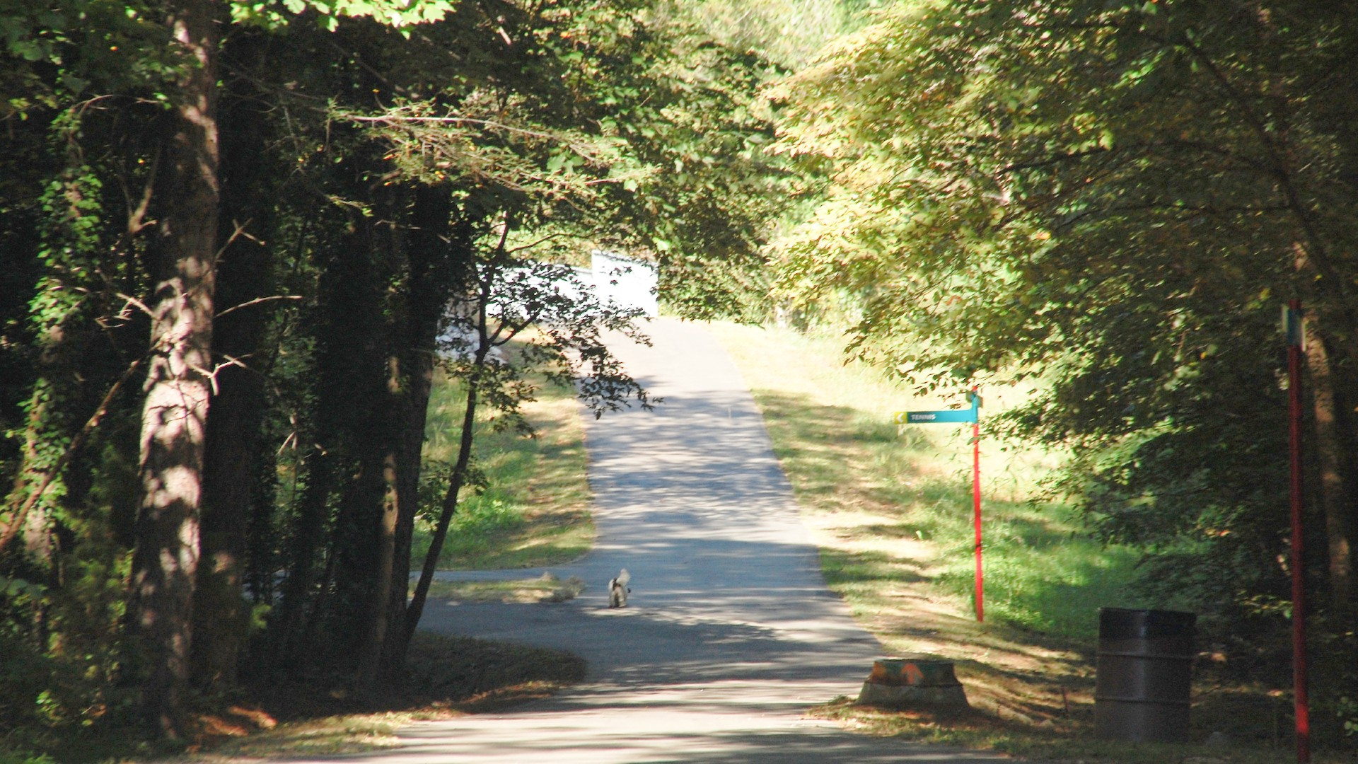 paved path between trees with a house creek greenway sign