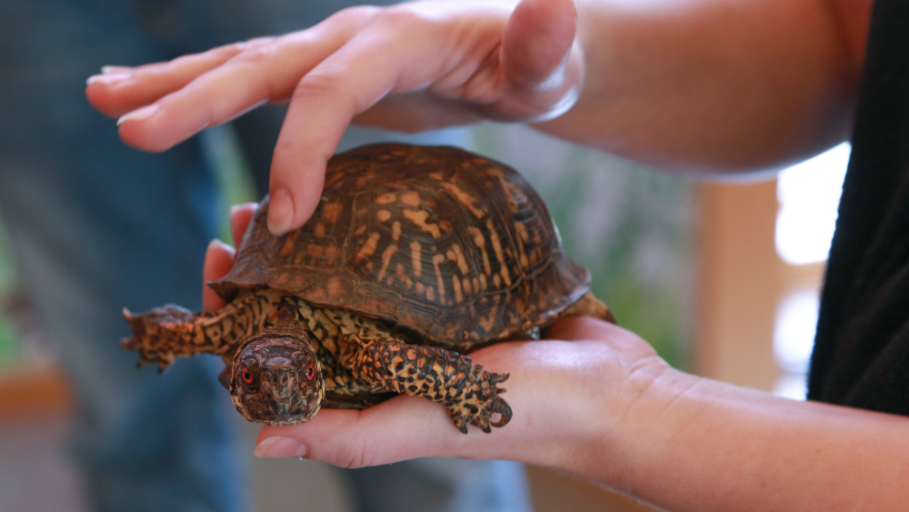 Turtle being held by instructor during nature program