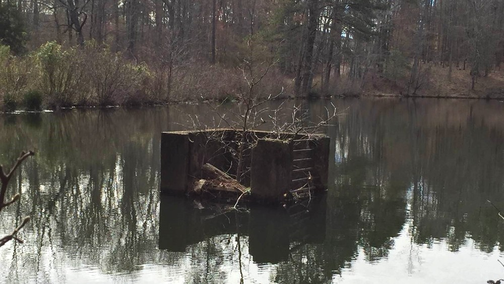 Lake with dam that has branches and brush built up blocking it