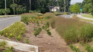 Sandy Forks Road Bioretention basin