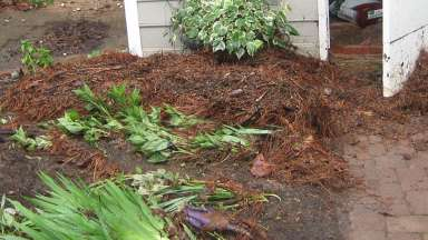 A yard with debris and plants washed over after flooding to a yard on Dresden Lane
