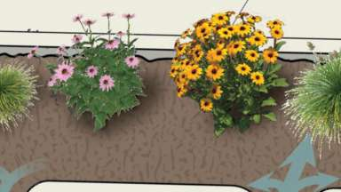 A rendering of the plants and soil for the bioretention on Peterson Street