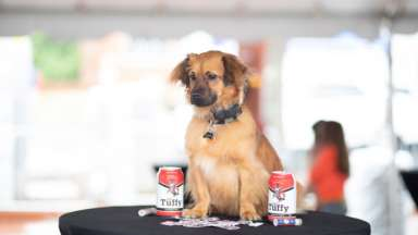 Old Tuffy beer is debuted at Packapalooza