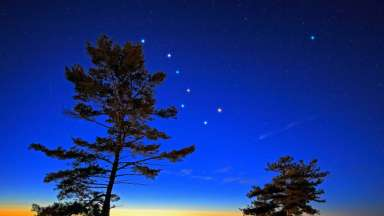 Looking up at star constellations in the night sky with trees in view