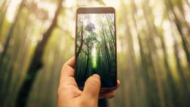 Smart phone taking image of trees