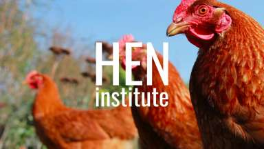 Brown chickens with the words Hen Institute