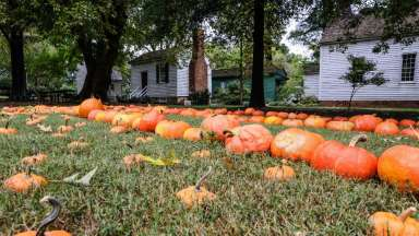 Pumpkins laid in the grass in front of historic buildings