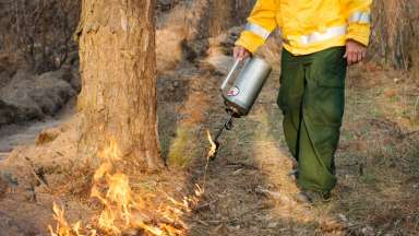 Person conducting safe prescribed burn to forest floor