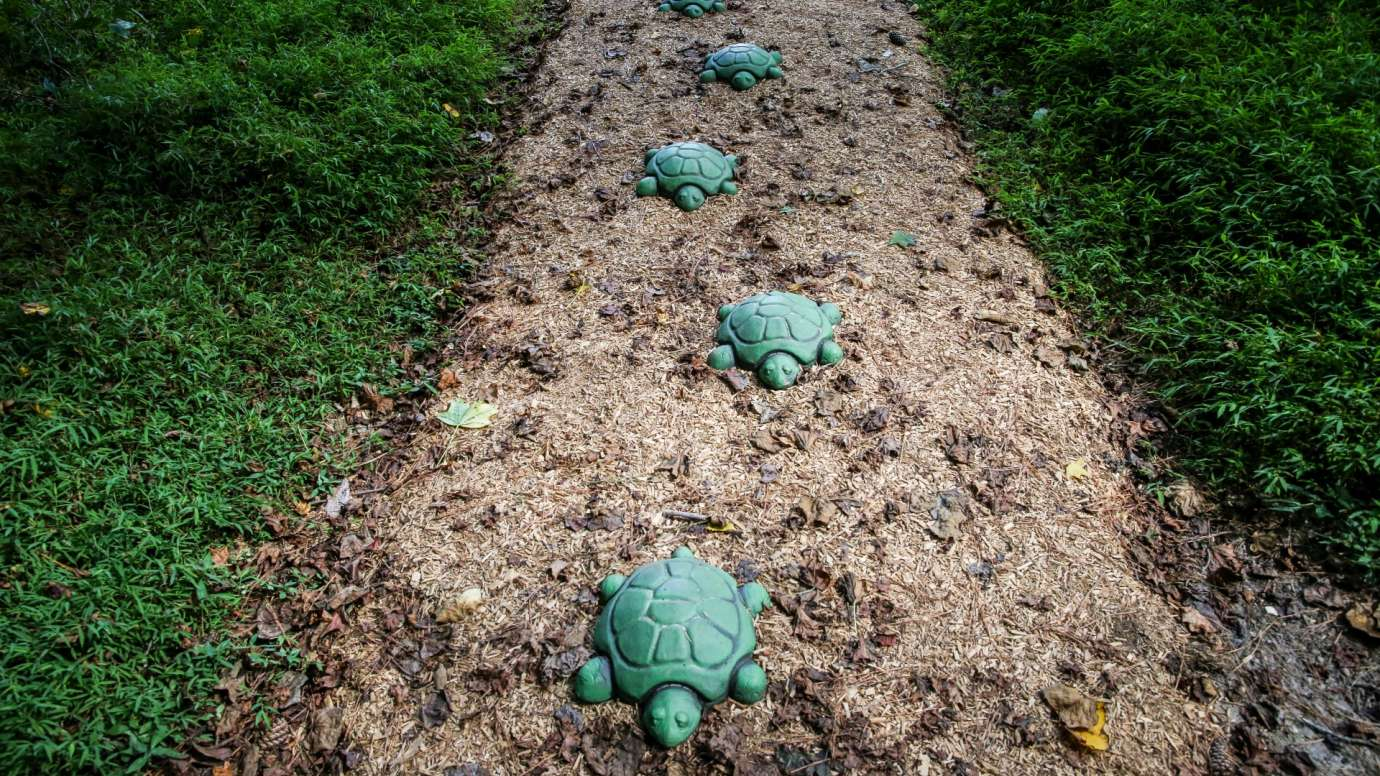 A line of artistic turtles leading down a trail